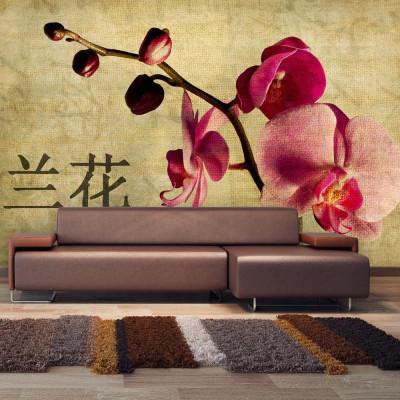 Fototapeta - Japanese orchid