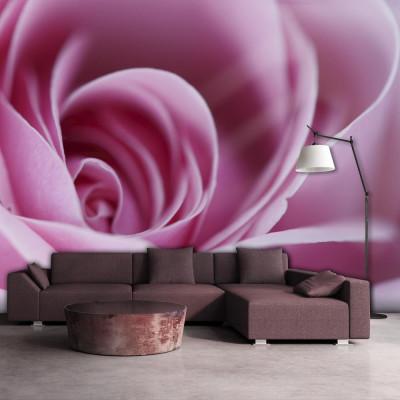 Fototapeta - Różowa róża